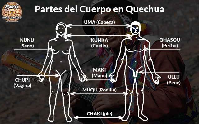 el cuerpo humano y sus partes en quechua imagenes